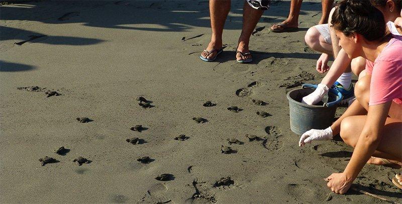 Protecting Sea Turtles in Costa Rica Playa Tortuga
