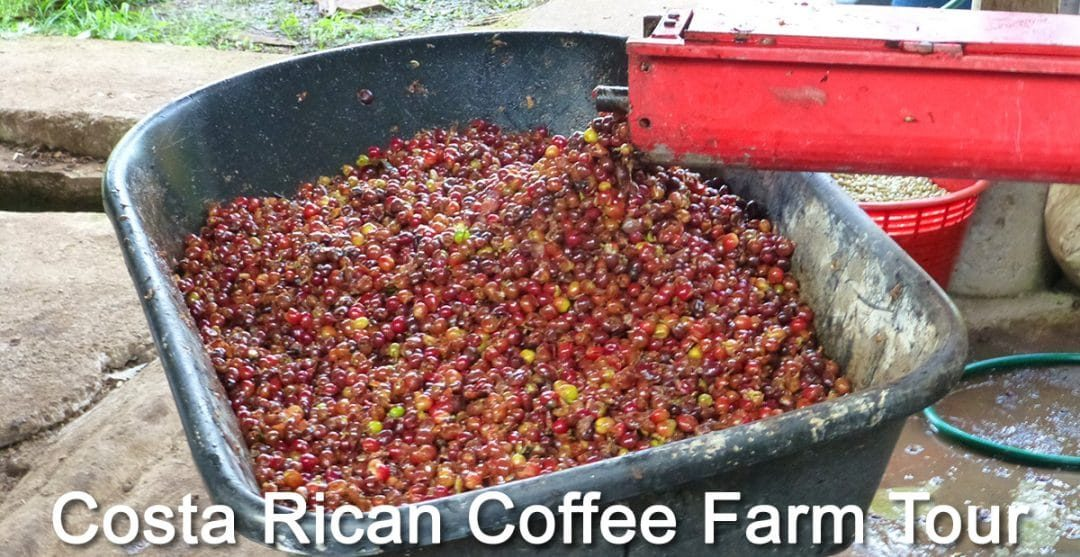 Costa Rica Coffee Farm Tour